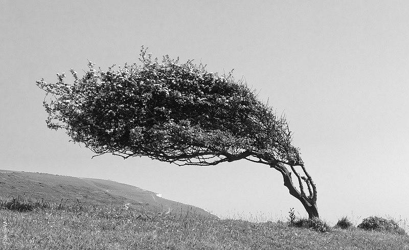 Treeee 1